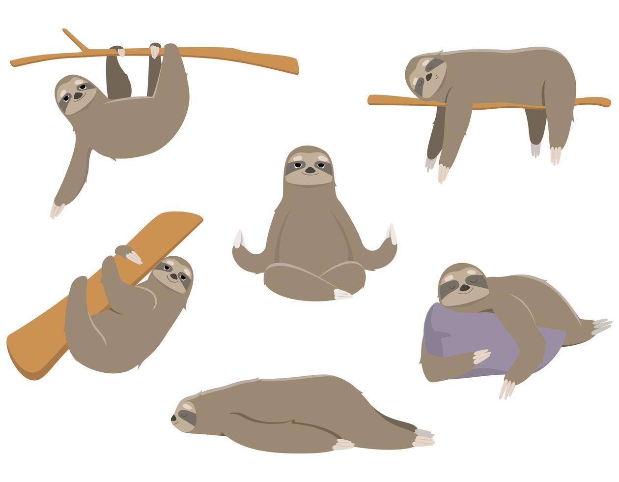 bradipo in pose diverse vettore