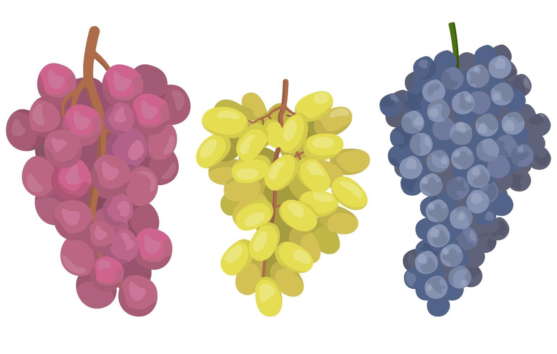 set di uve di diverse varietà vettore