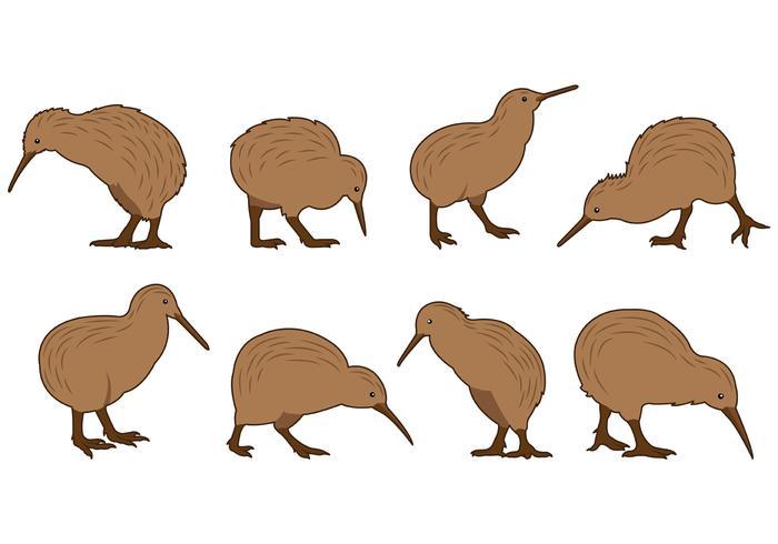 Set Di Vettori Di Uccelli Kiwi