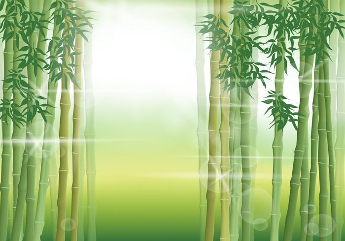 Scena di bambù al mattino vettore