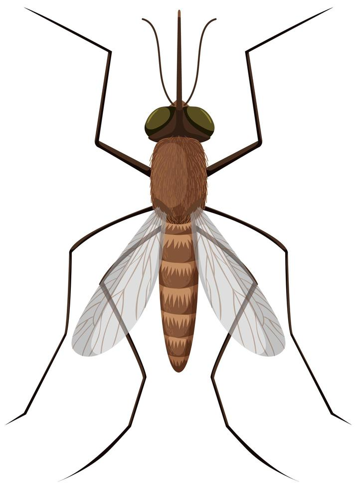zanzara su sfondo bianco vettore