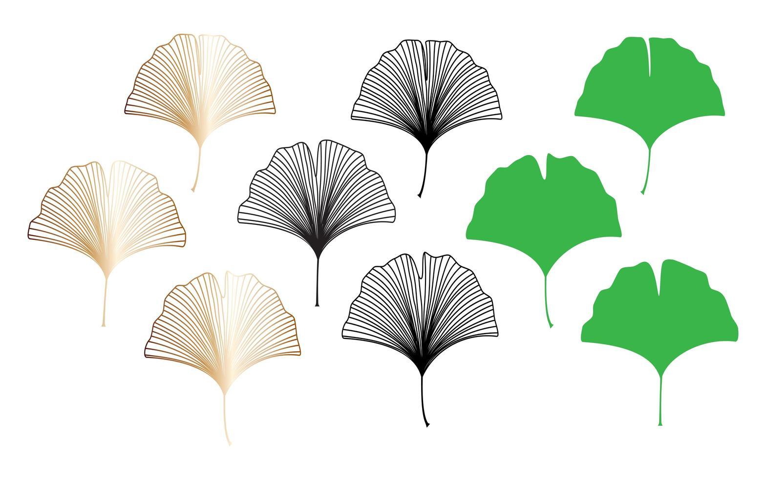 raccolta di foglie di ginkgo biloba vettore