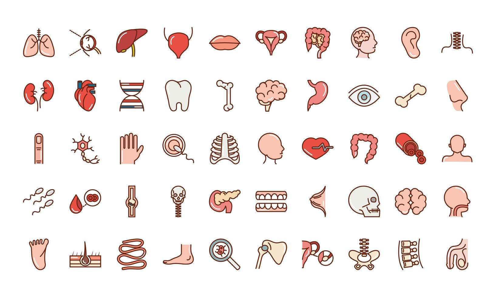 set di icone di anatomia e salute del corpo umano vettore