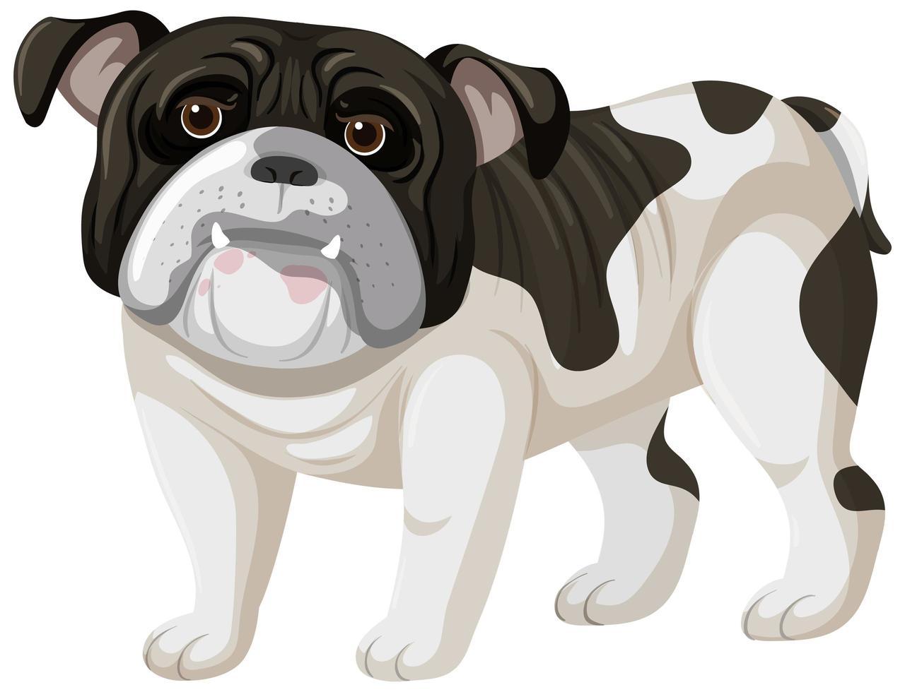stile cartone animato boxer su sfondo bianco vettore