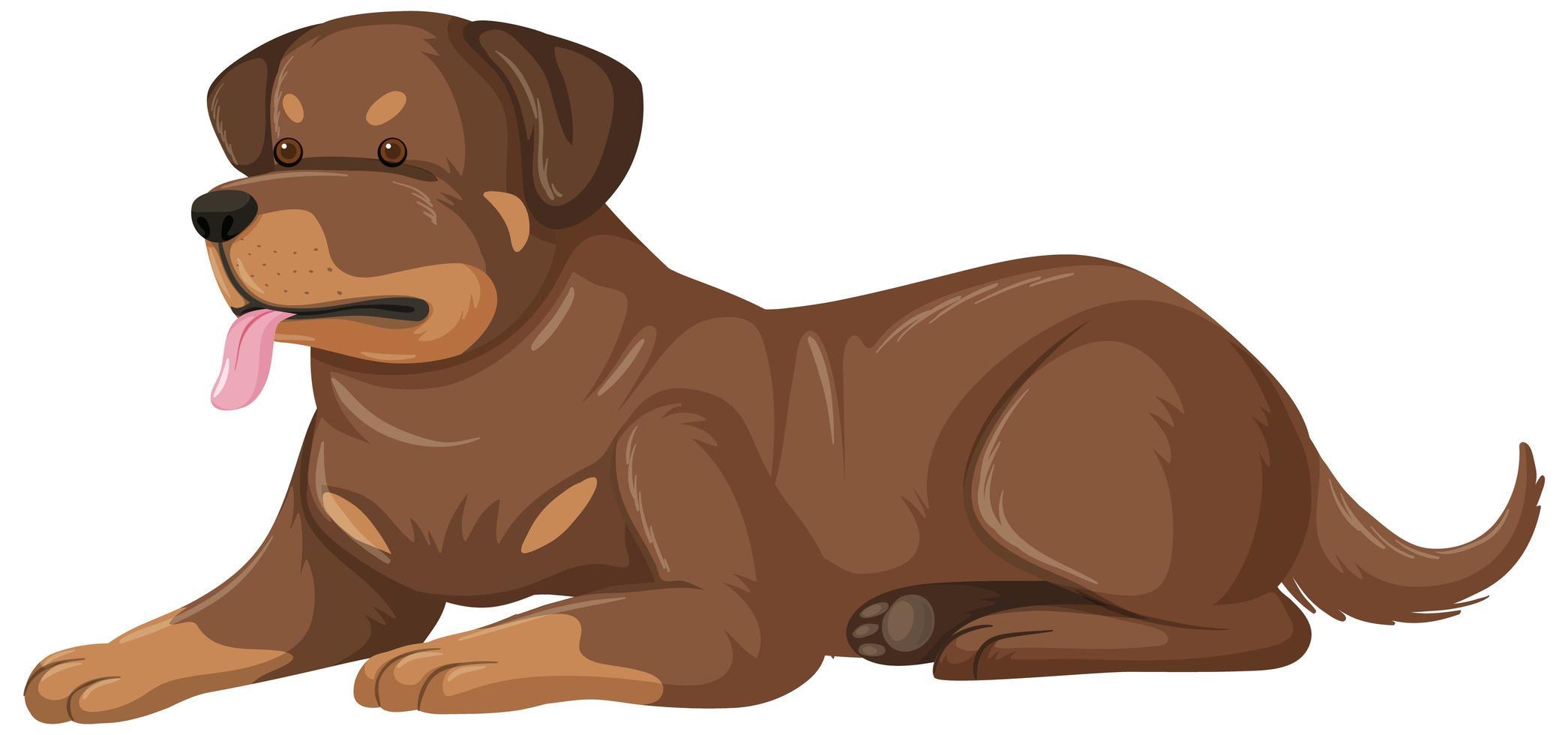 stile cartone animato rottweiler su sfondo bianco vettore