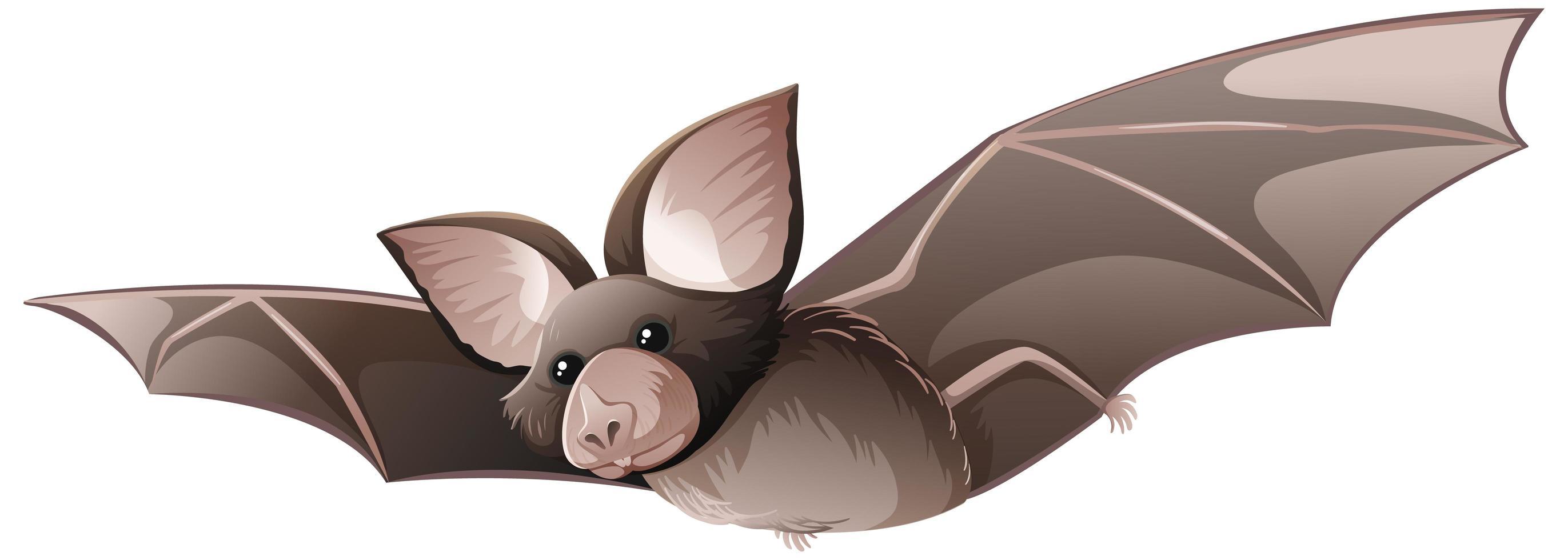 pipistrello dal naso a foglia della California isolato su sfondo bianco vettore