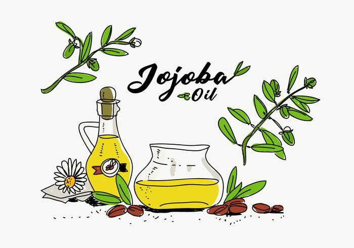 Illustrazione disegnata a mano di vettore della bottiglia di olio di jojoba
