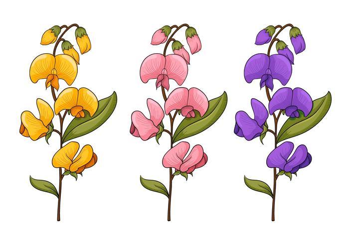 Vettori di fiori di pisello dolce