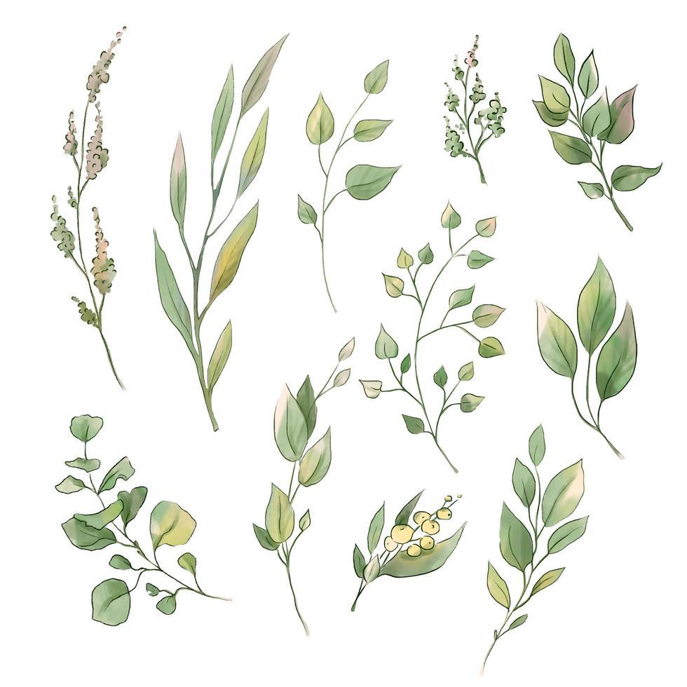 set di foglie e fiori teneri dell'acquerello vettore