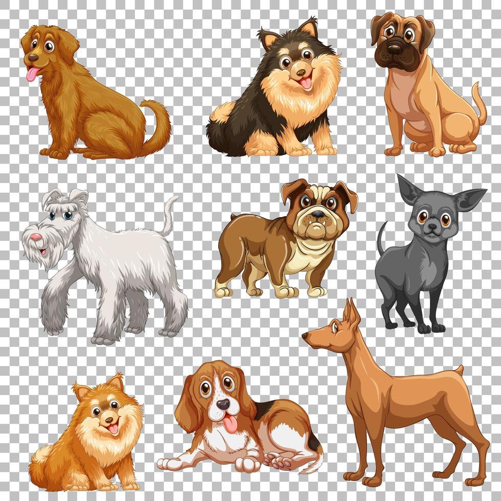 set di diversi cani isolati vettore