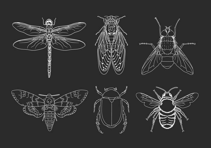 Illustrazione disegnata a mano degli insetti vettore