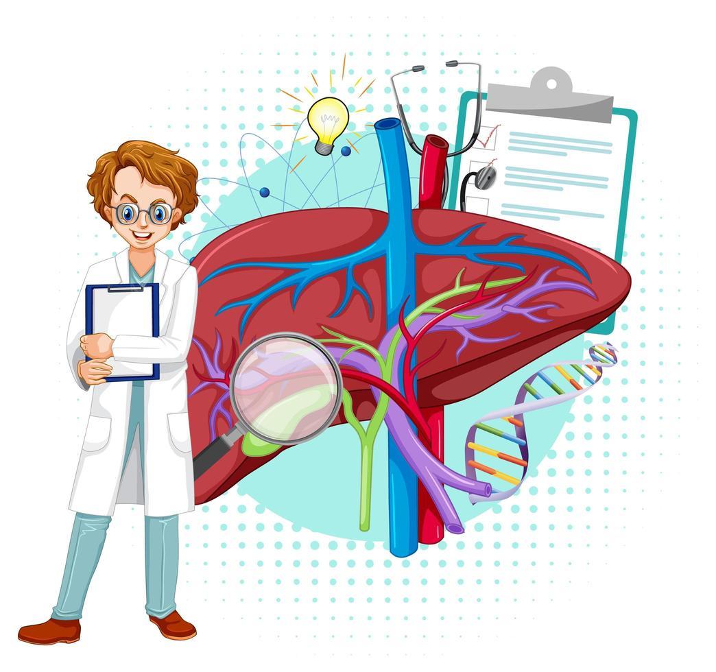 medico e fegato su sfondo bianco vettore