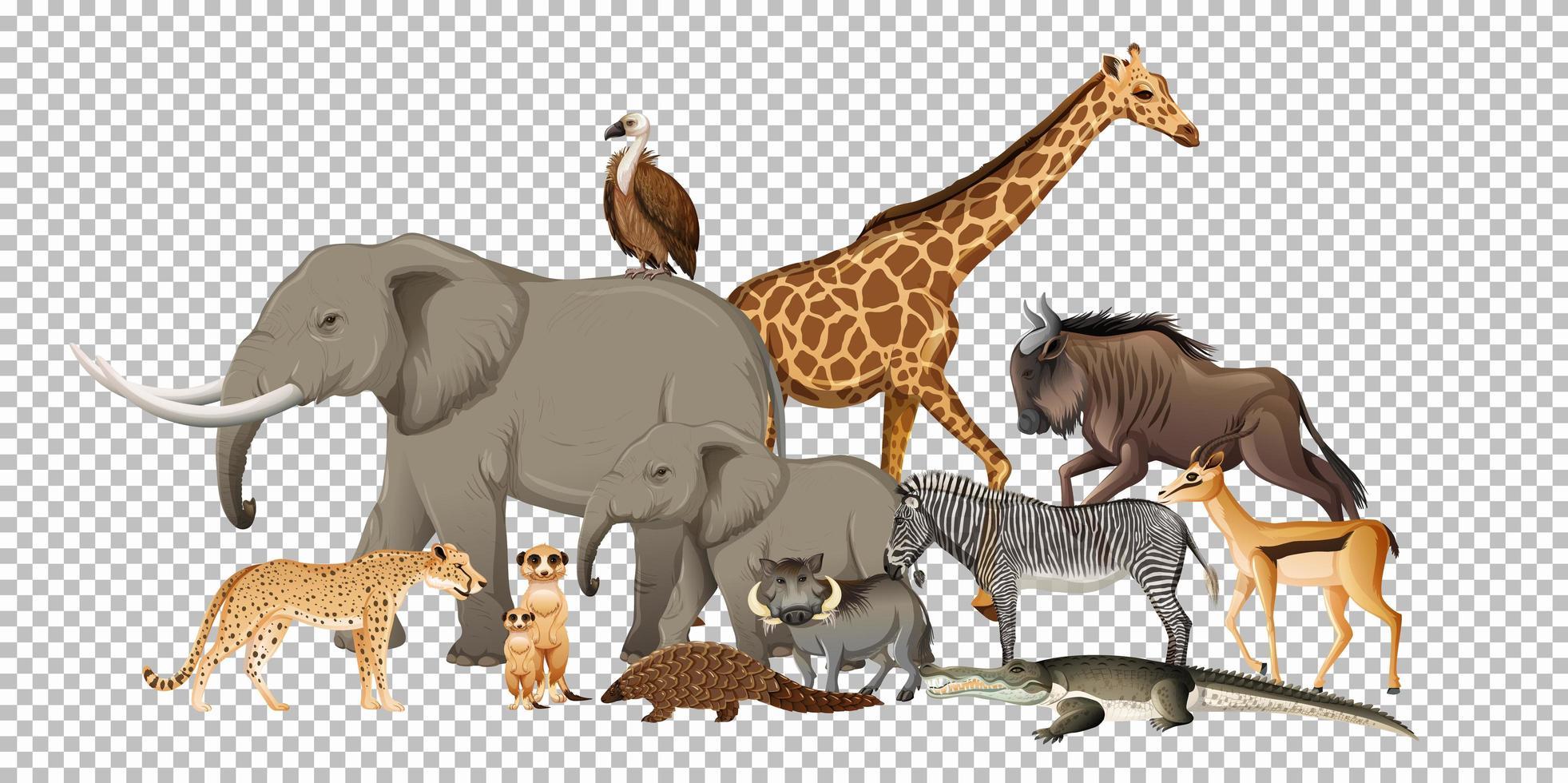 gruppo di animali selvatici africani su sfondo trasparente vettore