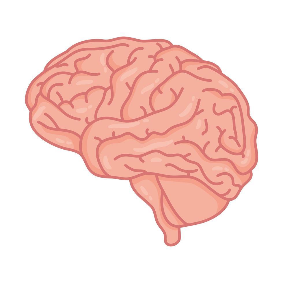 cervello umano, simbolo di cura della salute mentale vettore