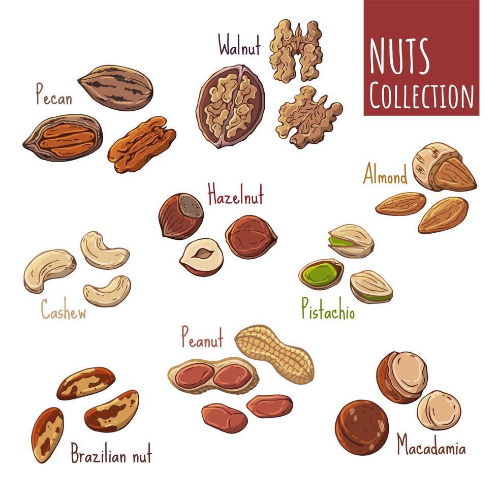 gruppo di illustrazioni vettoriali sul tema della nutrizione insieme di diversi tipi di noci. oggetti isolati realistici per la progettazione.