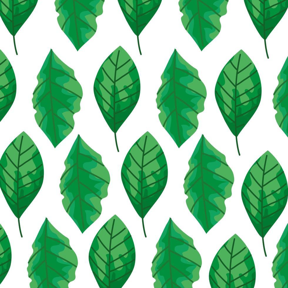 sfondo di foglie naturali icone vettore