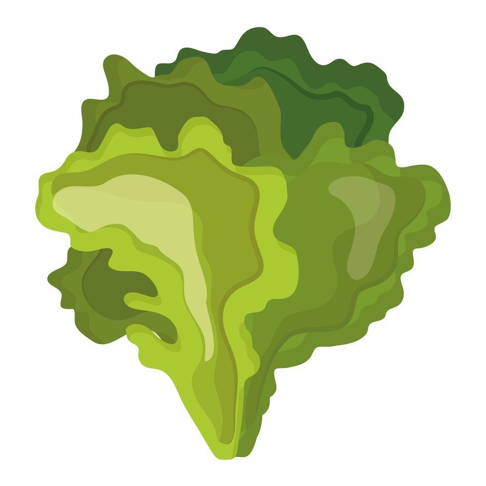 icona di cibo sano lattuga fresca verdura vettore