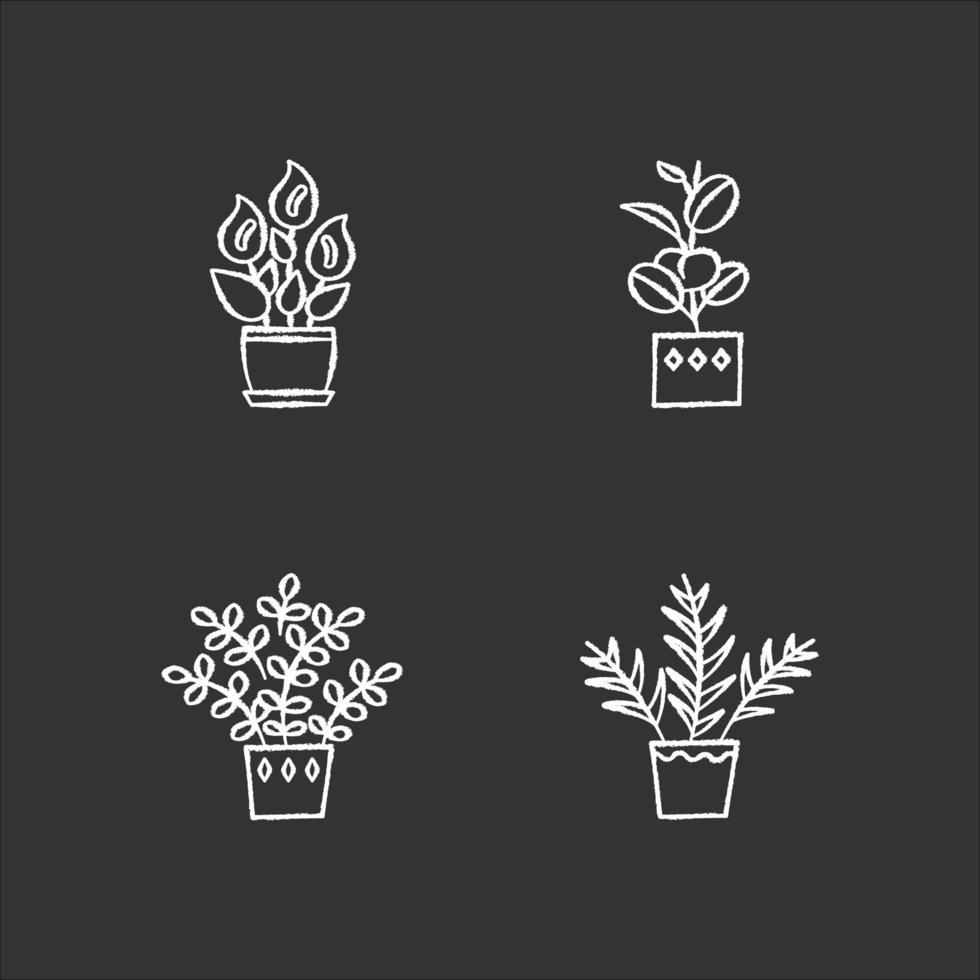 piante da appartamento gesso icone bianche impostate su sfondo nero. piante d'appartamento. piante ornamentali addomesticate. giglio della pace, pianta zz. palma da salotto, ficus. illustrazioni di lavagna vettoriale isolato