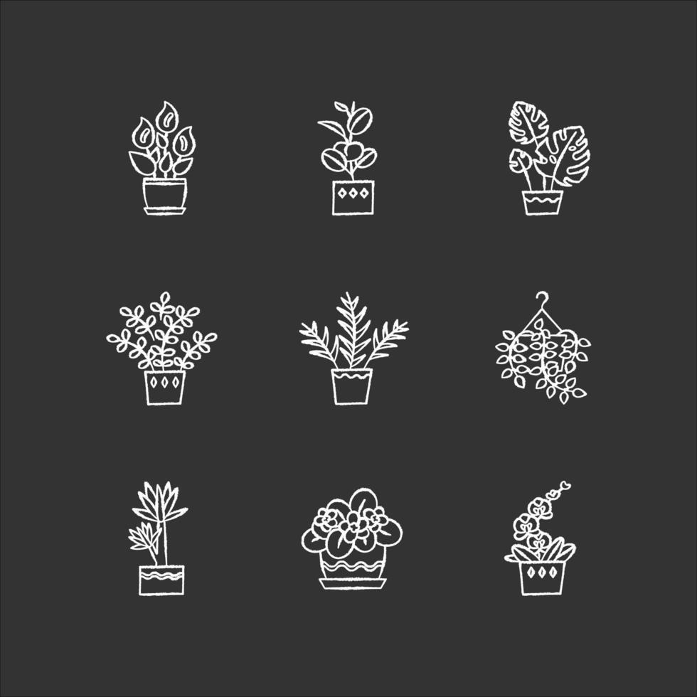piante domestiche gesso icone bianche impostate su sfondo nero. piante d'appartamento. piante da interni decorative. violetta africana, ficus, monstera. giglio della pace, pothos. illustrazioni di lavagna vettoriale isolato