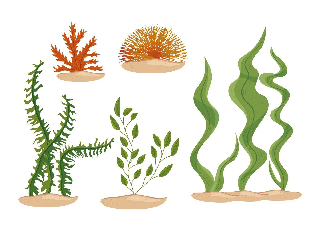 set di icone di alghe vettore
