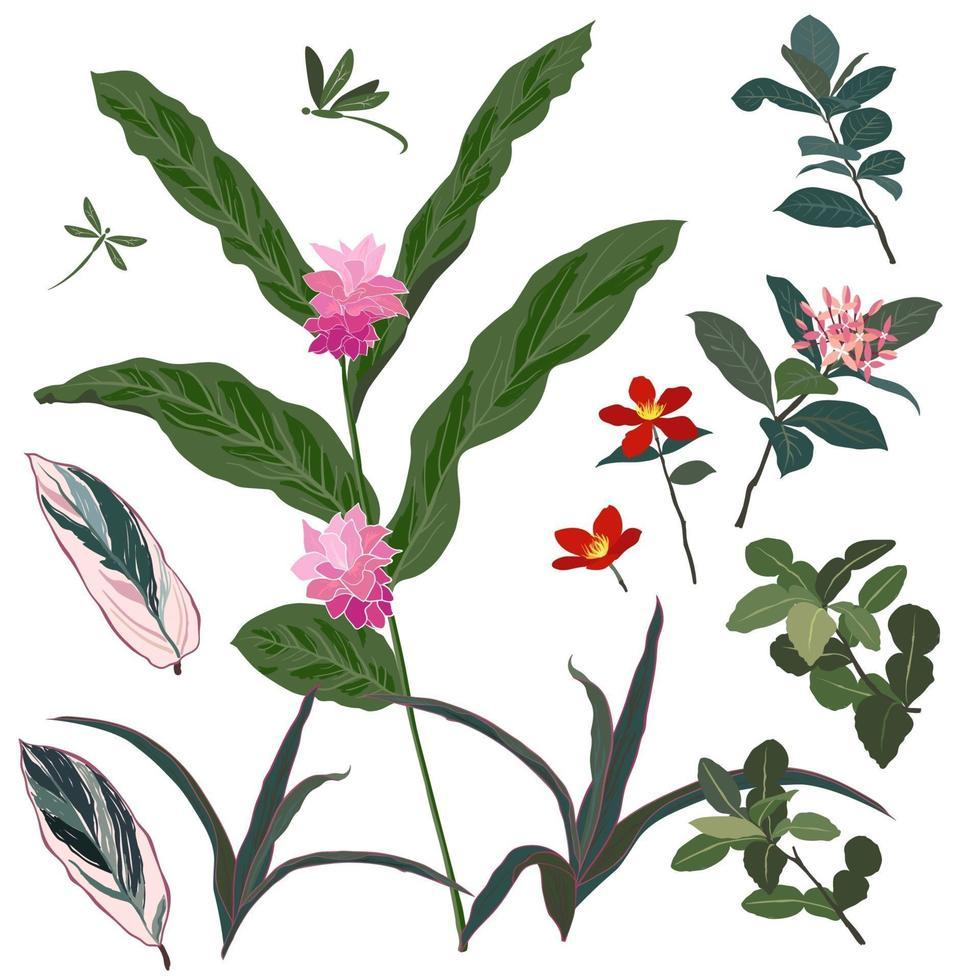 set di bellissimi fiori tropicali e foglie vettore