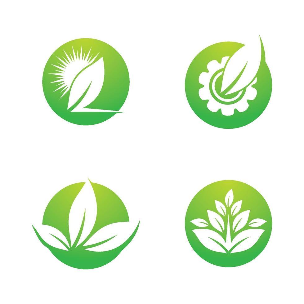immagini del logo foglia vettore