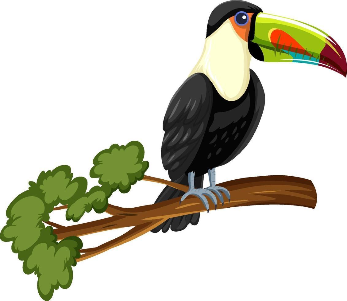 tucano uccello su un ramo isolato su sfondo bianco vettore