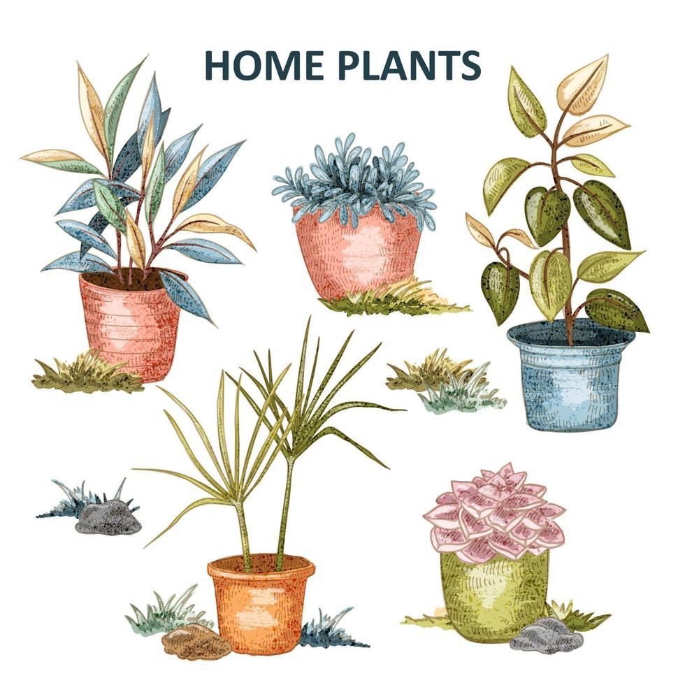 set di piante domestiche vettore