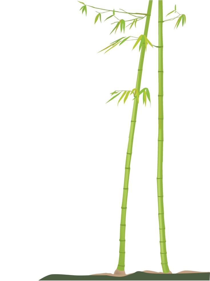 albero di bambù sul grafico illustrazione vettoriale
