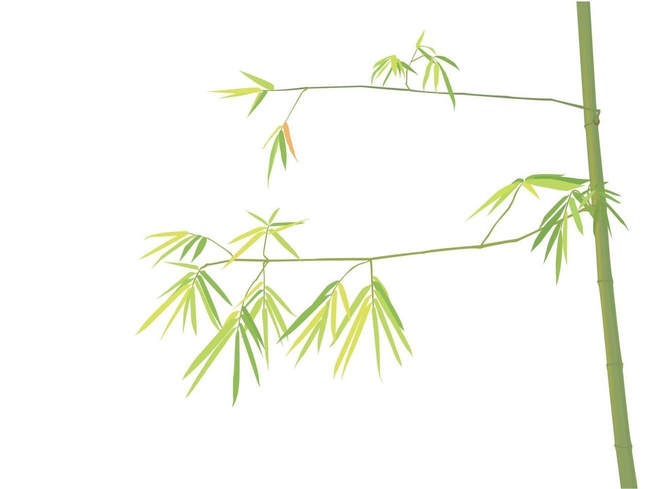 bammboo albero sul grafico illustrazione vettoriale