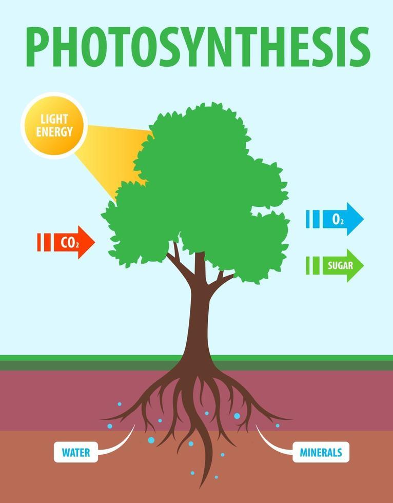 schema di fotosintesi di un albero. conversione dell'anidride carbonica in ossigeno. illustrazione di insegnamento di vettore piatto.