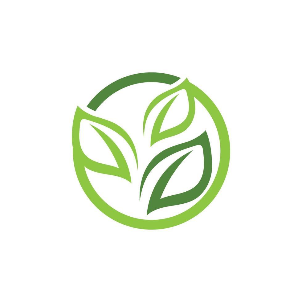 loghi di ecologia foglia di albero verde vettore