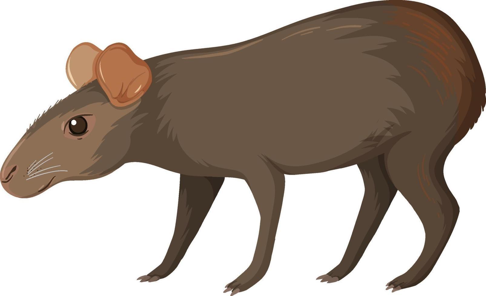 capibara animale selvatico su sfondo bianco vettore