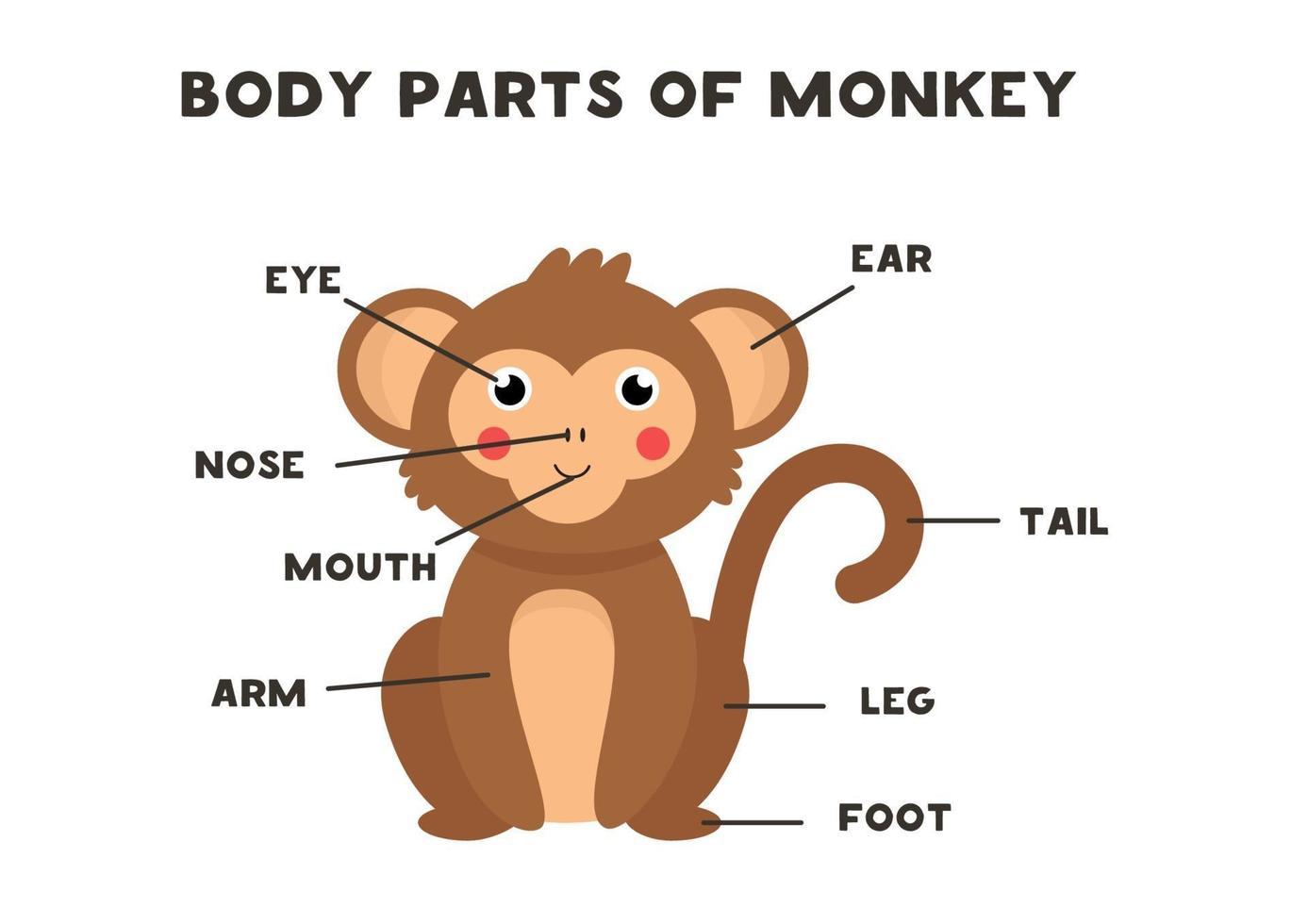 parti del corpo della scimmia. regime per i bambini. vettore