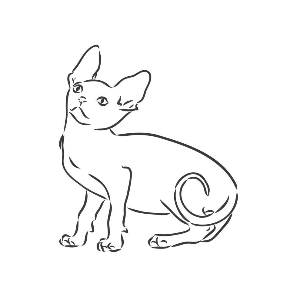 illustrazione vettoriale di un gatto sphynx con un rivestimento isolato su uno sfondo bianco. per la stampa su vestiti, carta, logo, icona, vuoto per t-shirt designer, piatti, letto
