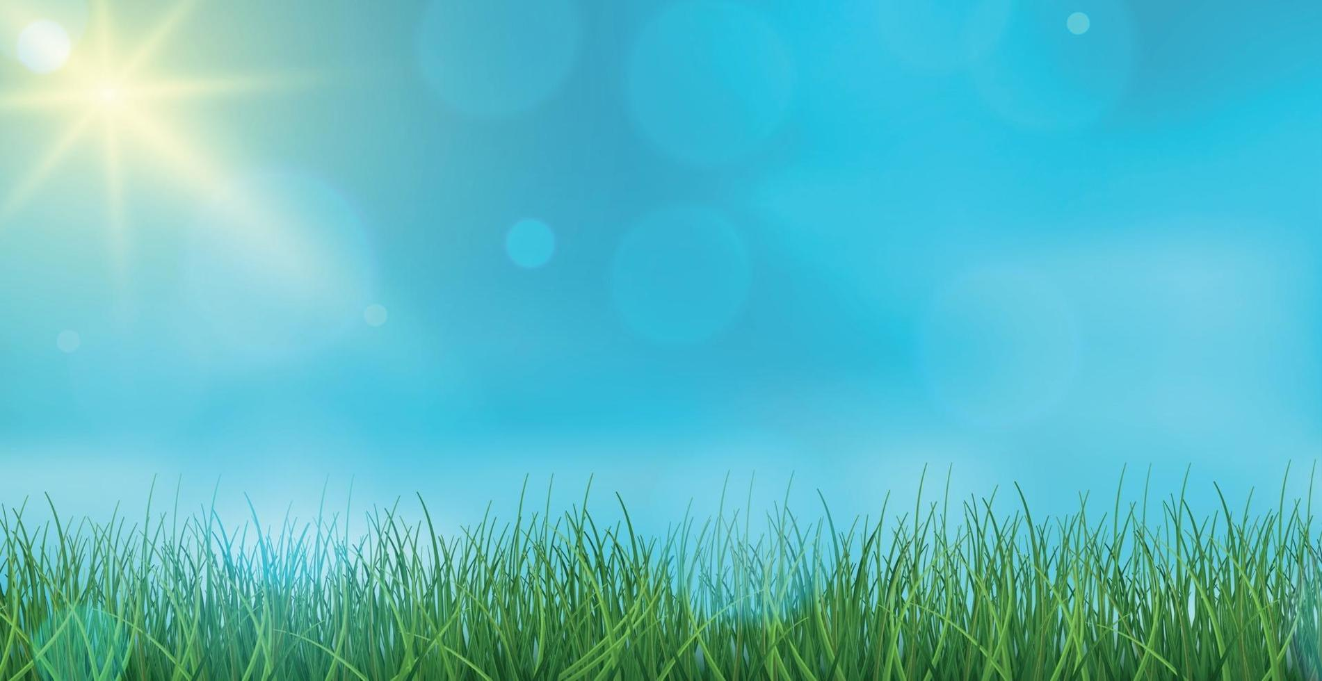 paesaggio erba verde su uno sfondo di cielo blu bokeh - vettore