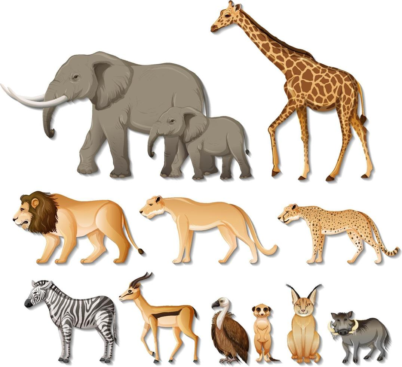 set di isolati animali selvatici africani su sfondo bianco vettore