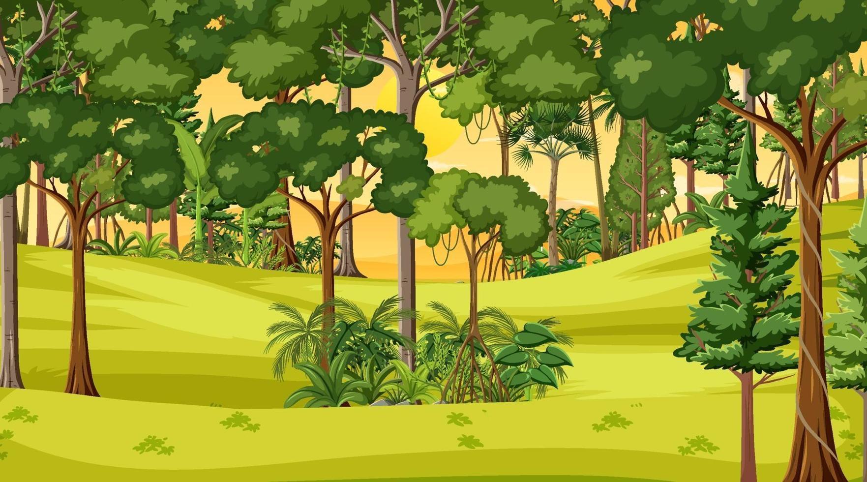 scena del paesaggio forestale al tramonto vettore
