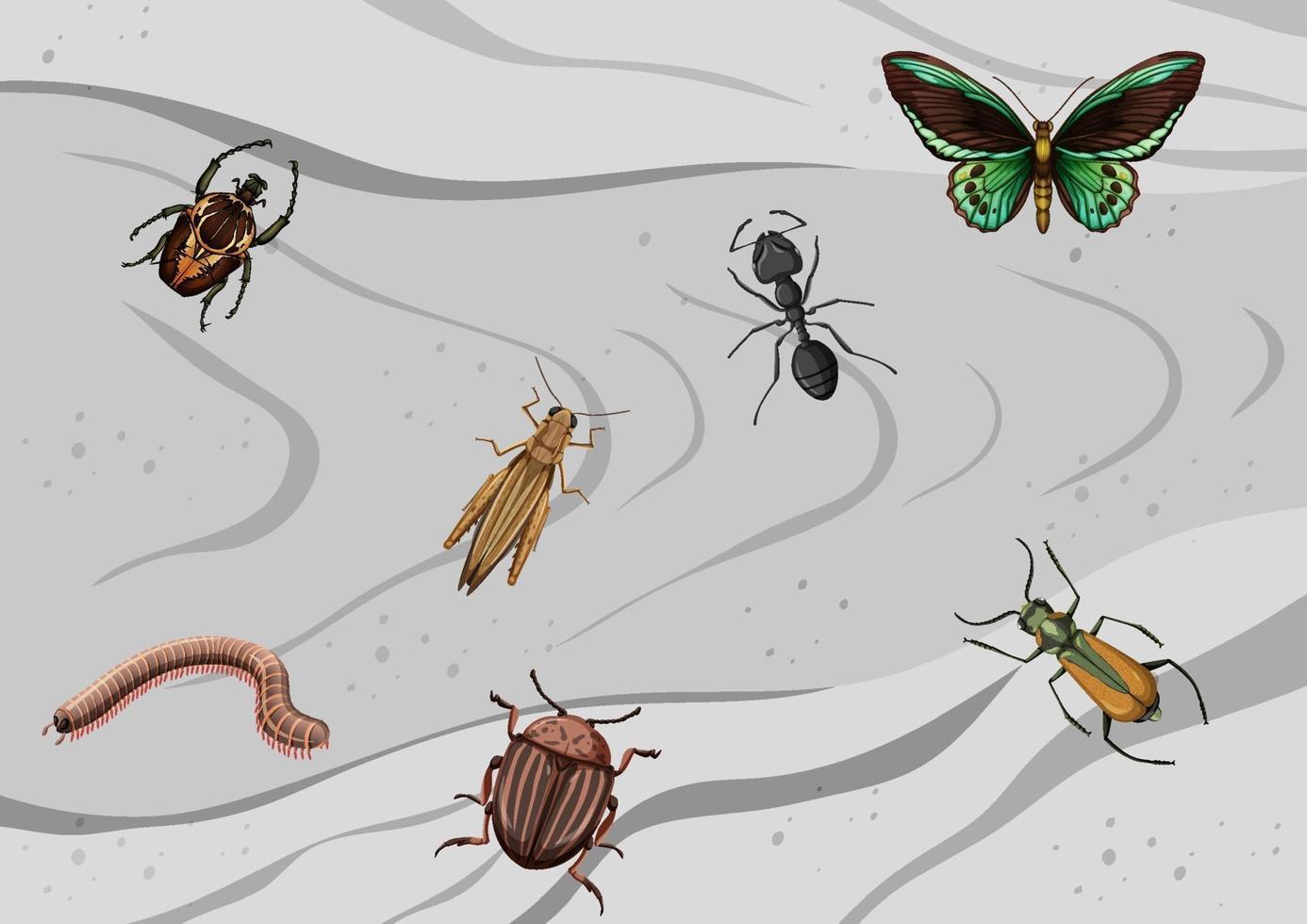 vista dall'alto di diversi tipi di insetti vettore