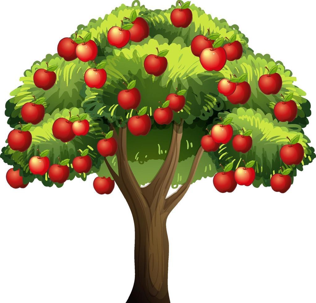un albero di mele isolato su sfondo bianco vettore