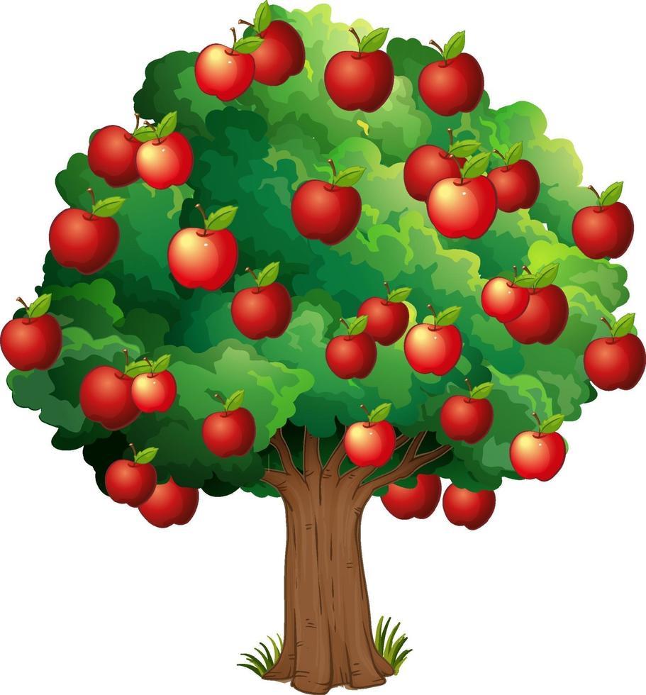 mele rosse su un albero isolato su sfondo bianco vettore