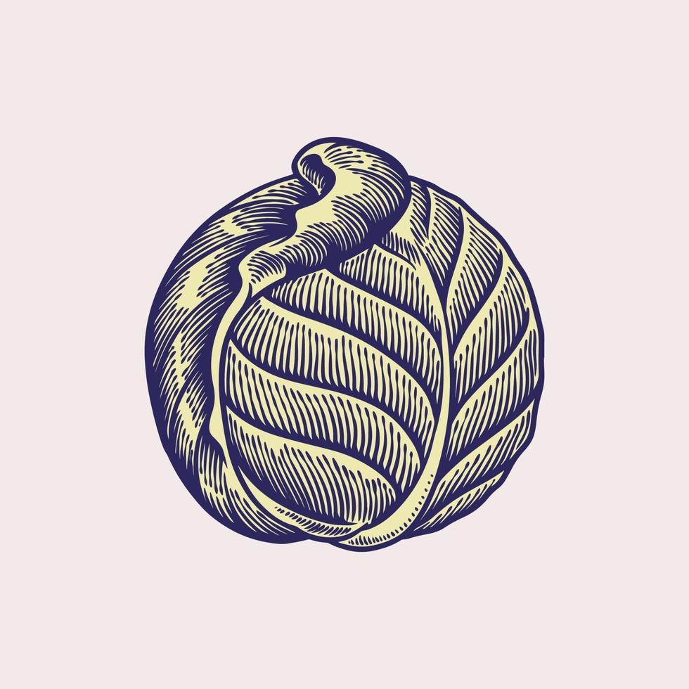 illustrazione vettoriale di cavolo. schizzo cibo isolato su sfondo bianco. cucina a tema cibo vegano. disegnato a mano di verdure. immagine incisa. concetto di cibo fresco biologico e sano, dieta e vegetariano