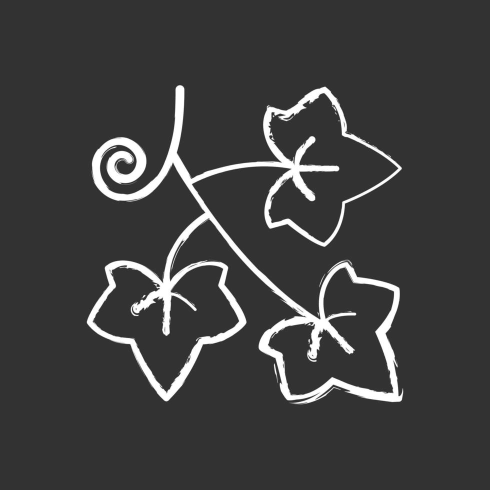 edera inglese gesso icona bianca su sfondo nero vettore