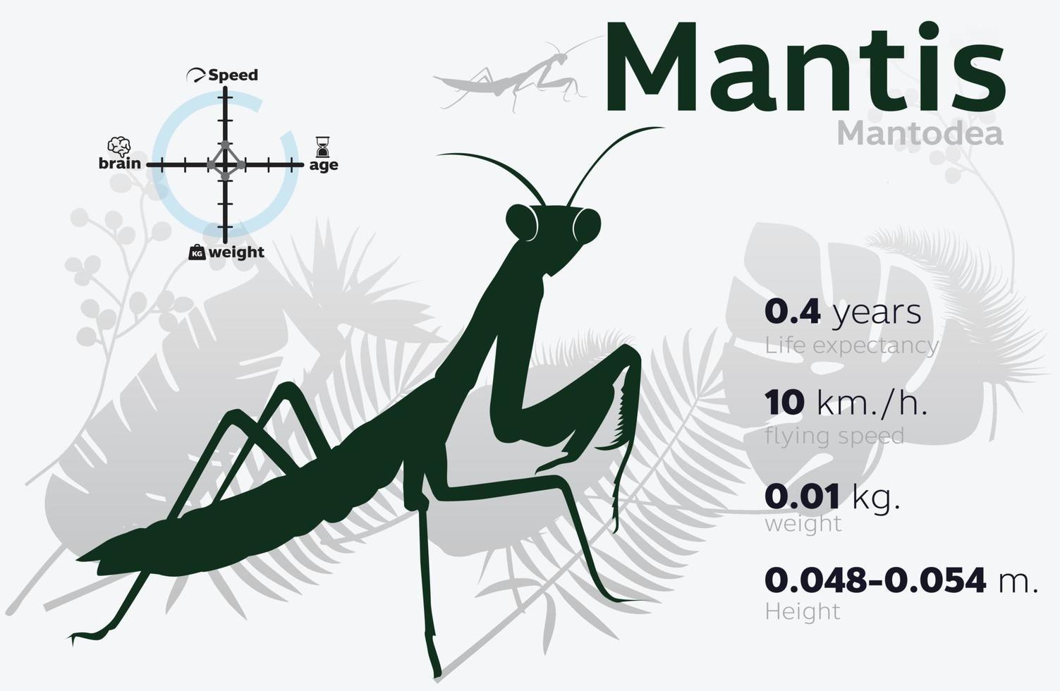 illustrazione delle informazioni della mantide predatrice su uno sfondo vettoriale 10