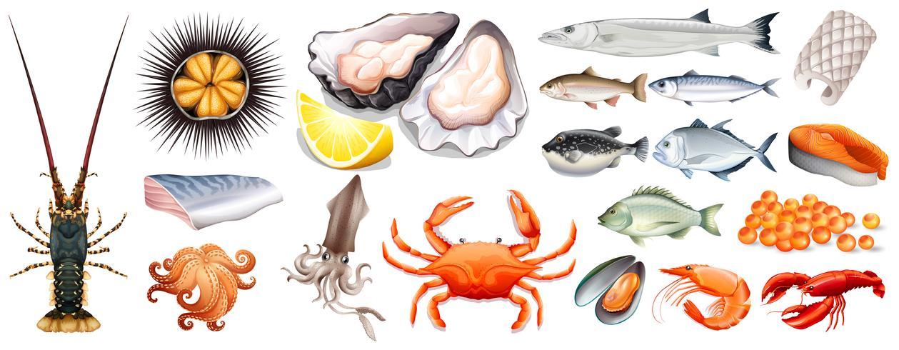 Set di diversi tipi di frutti di mare vettore