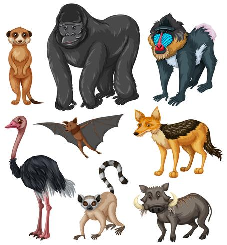 Diversi tipi di animali selvatici vettore