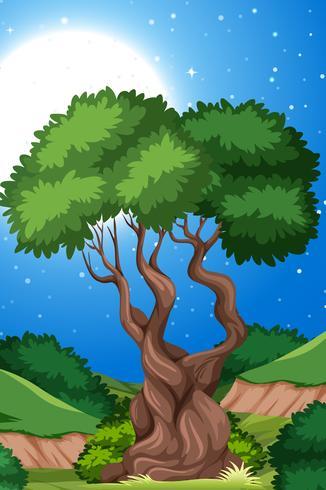 Un albero sullo sfondo della natura vettore
