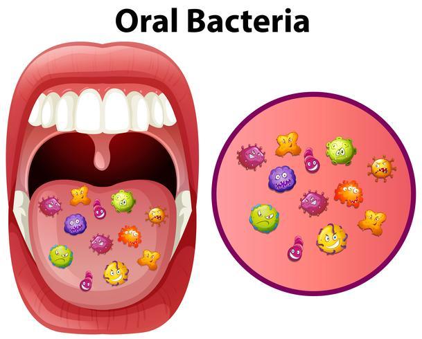 Un'immagine che mostra i batteri orali vettore