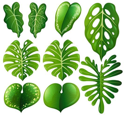 Set di diversi tipi di foglie vettore