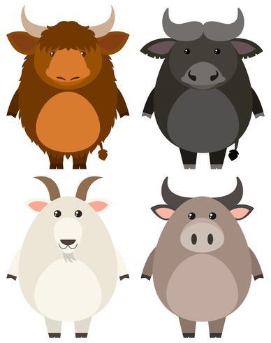 Animali da fattoria su sfondo bianco vettore